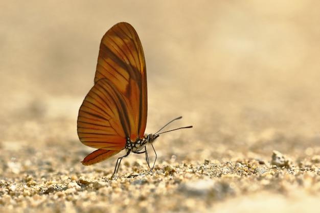 Vlinder (dryas julia) op bodemvocht