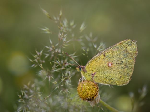 Vlinder gefotografeerd in hun natuurlijke omgeving.