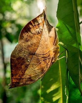Vlinder het hangen op het groene beeld van het blad dichte omhooggaande insect