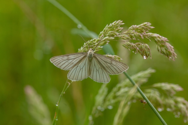 Vlinder in de bloem