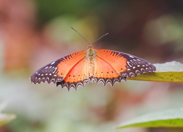 Vlinder in de jungle de schoonheid van de natuur oranje butterfy met gestreepte zwarte vleugels