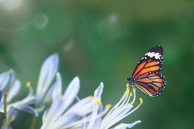 Vlinder in het wild