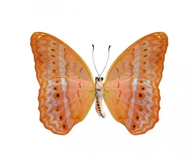 Vlinder met lagere vleugels