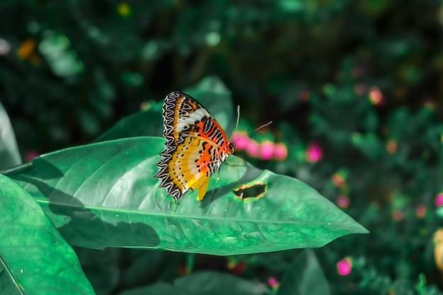 Vlinder. mooie tropische vlinder op vage aardachtergrond. kleurrijke vlinders