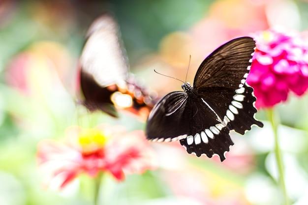 Vlinder op bloem en vage achtergrond