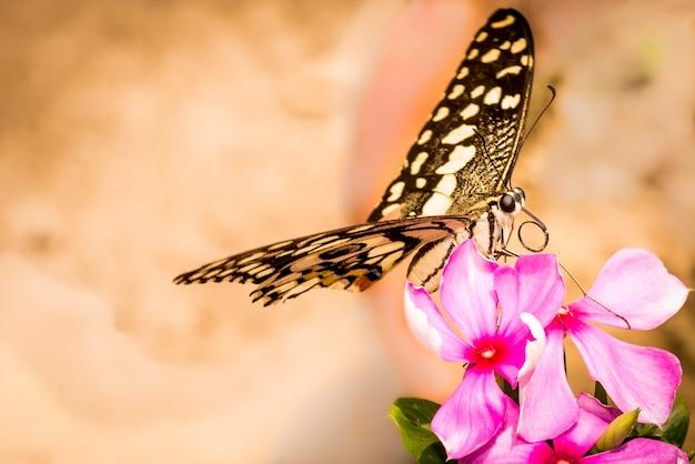 Vlinder op bloem Premium Foto