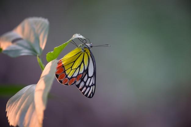 Vlinder op de bladeren