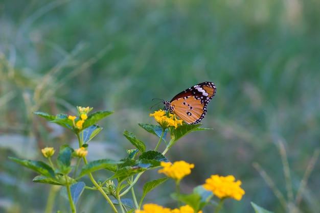 Vlinder op de bloemplant