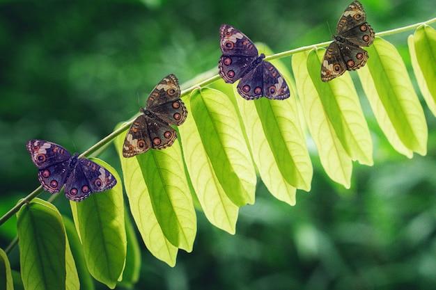 Vlinder op de groene aard van de bladerenlente