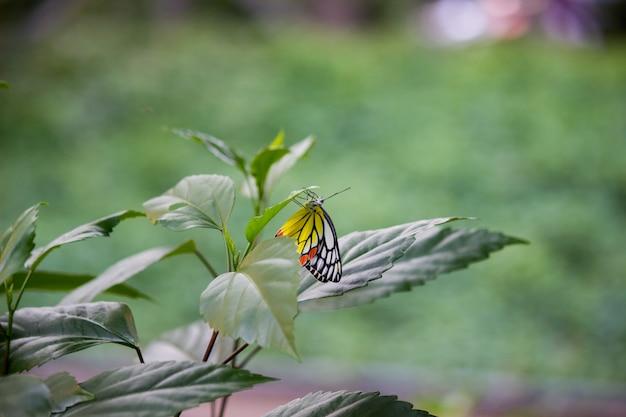 Vlinder op de plant