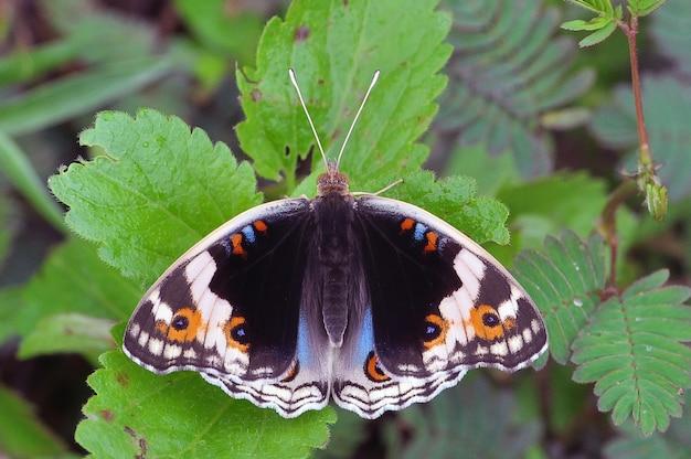 Vlinder op een gras