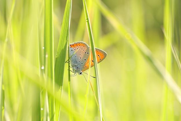 Vlinder op een lenteweide in de zon Premium Foto