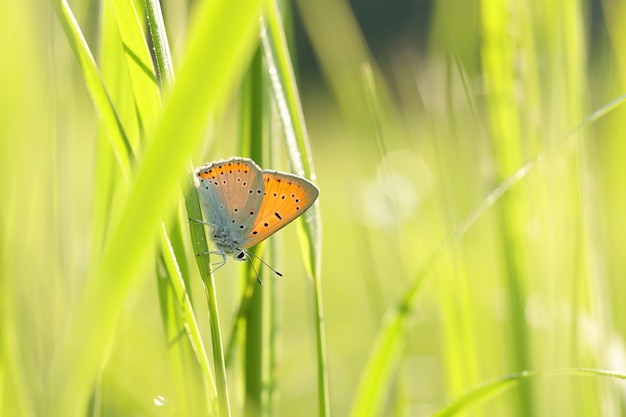 Vlinder op een lenteweide in de zon