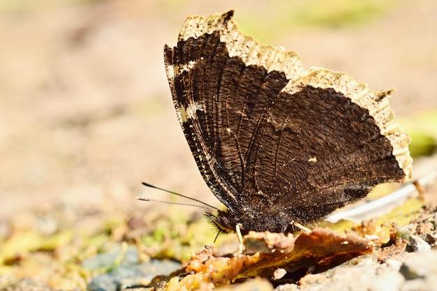 Vlinder op een tak