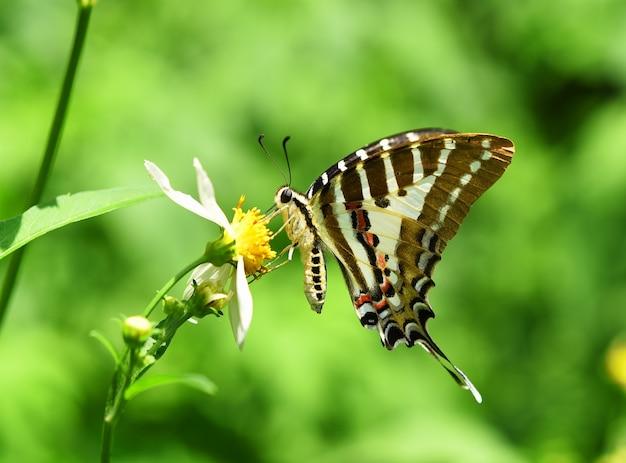Vlinder op gele bloem in de tuin