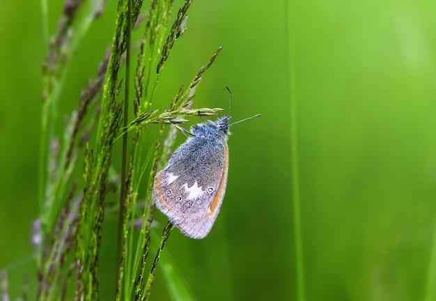 Vlinder op plant close-up