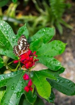 Vlinder op rode bloemen