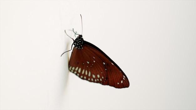 Vlinder op witte concrete muur dichte omhooggaand
