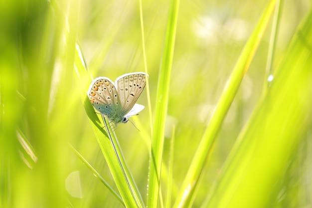 Vlinder tussen het verse groene gras in de zon