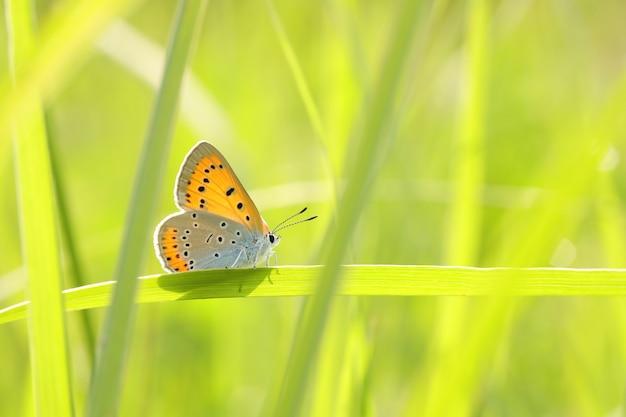 Vlinder tussen het verse groene gras in de zon Premium Foto