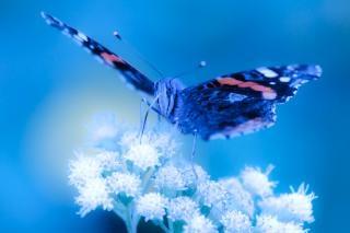 Vlinder verzamelen stuifmeel pollen