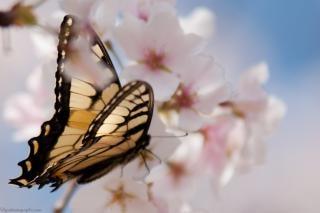 Vlinder verzamelen stuifmeel vlinder landde