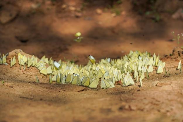 Vlinders die zich op grondgrond bevinden