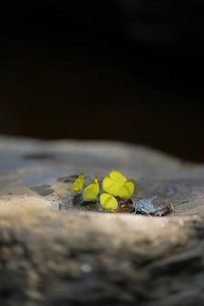 Vlinders die zich op steen bevinden