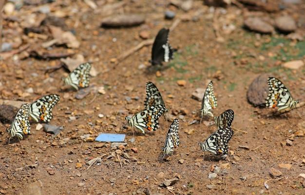 Vlinders eten de mineralen in de grond.