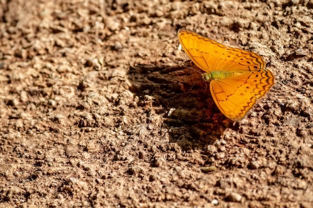Vlinders leven op de grond.