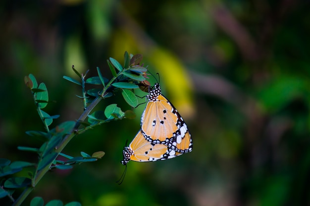Vlinders op de plant