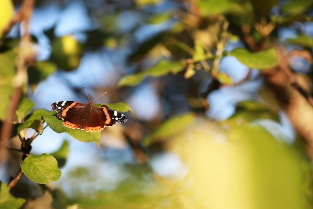 Vlinders op een boom. vlinders en nectar. berken sap. vlinders in het bos. natuur. woud. vlinders.