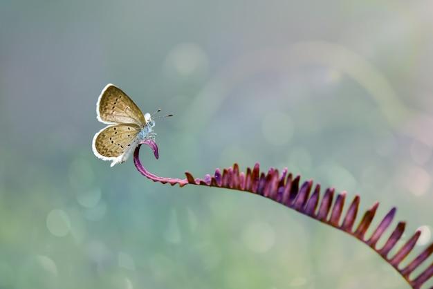 Vlinders op twijgen