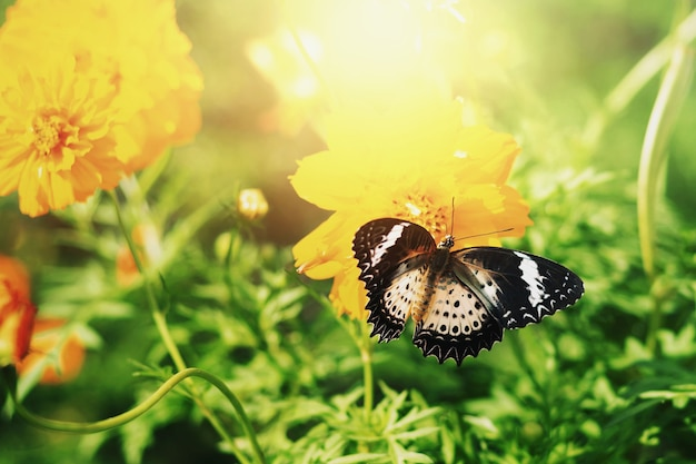 Vlinders zuigen 's ochtends nectar uit stuifmeel