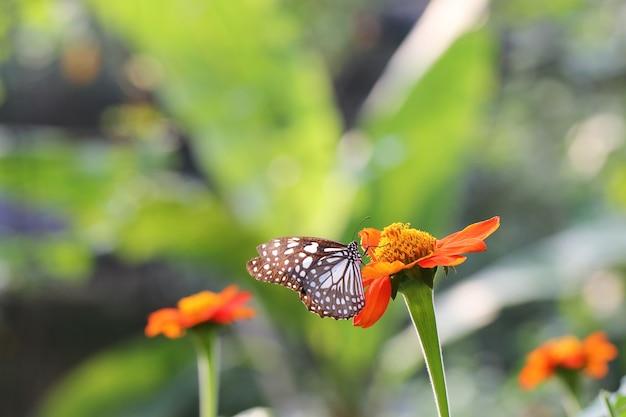 Vlindervlieg in de ochtendaard