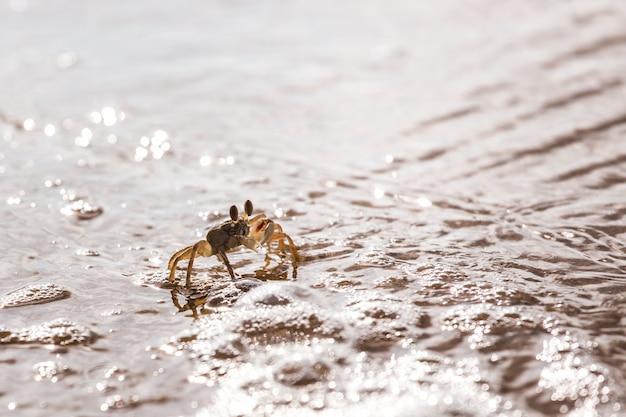 Vlugge landkrab op het witte strand, phuket thailand