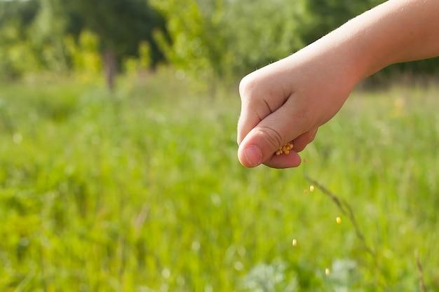 Voedsel liefde. twee hand met haver zaden.