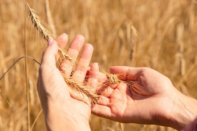 Voedselzekerheid in de wereld, een wereldwijd probleem, honger, kinderen moeten helpen, arme mensen hebben voedsel nodig om te leven, een hand met een bundel tarwe.