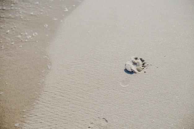 Voetafdruk op zand in zonlicht