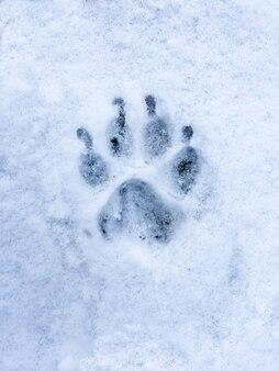 Voetafdruk van hond of wolf op sneeuw