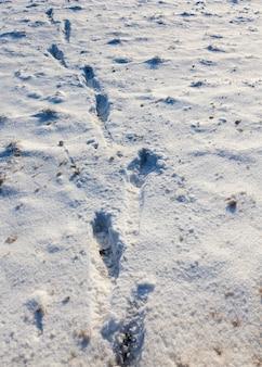 Voetafdrukken en deuken in de sneeuw nadat mensen er winterseizoen doorheen waren gegaan met sneeuw met schade