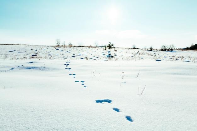 Voetafdrukken in het sneeuwlandschap met blauwe hemel