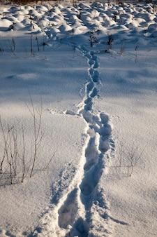 Voetafdrukken op sneeuwbanken na een wandeling door de sneeuw van een persoon, het winterseizoen in de natuur