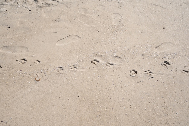 Voetafdrukken van de hond op het tropische zandstrand in zonnige zomerdag.
