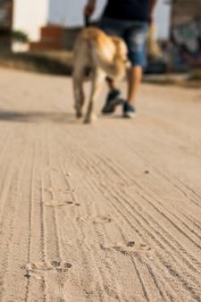 Voetafdrukken van een hond en een auto op het zand met een persoon.