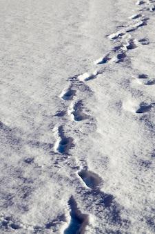 Voetafdrukken van mensen lopen op sneeuwlaag in de winter, park in de winter na een sneeuwstorm