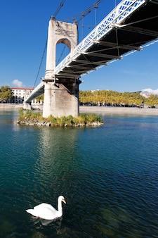Voetgangersbrug en zwaan op de rivier de rhône in de stad lyon
