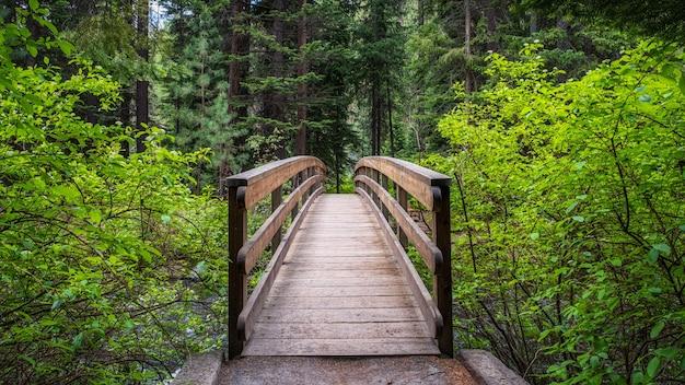 Voetgangersbrug in het bos