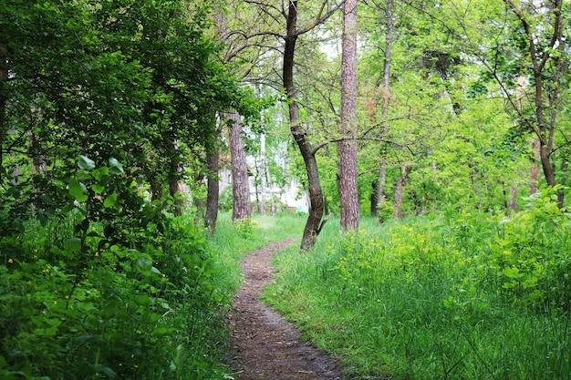Voetpad in het groene bos
