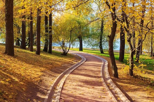 Voetpad tussen bomen met gele bladeren in het stadspark op zonnige herfstdag